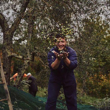 Pioggia Olive